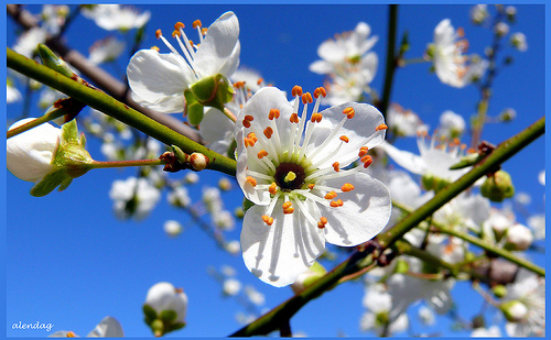 Wednesday Writing Prompt: Spring Holidays