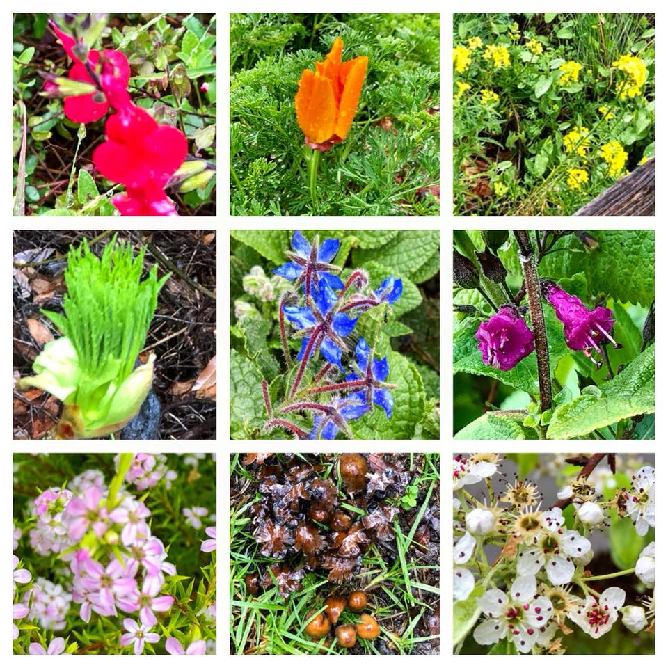 Writing Prompt – A Springtime Color Walk
