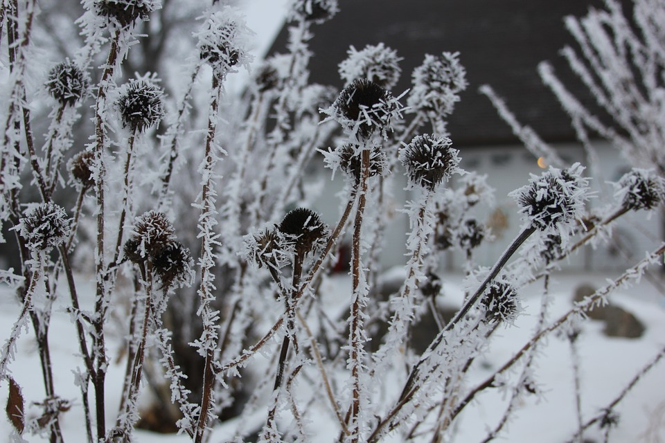 The Dead of Winter – and its Promise
